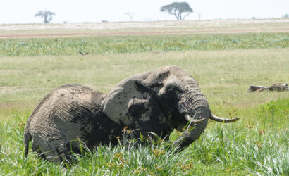 interesting-facts-about-the elephants